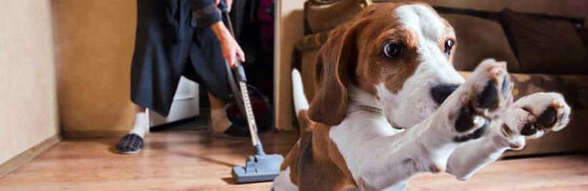 pet_hair_vacuum