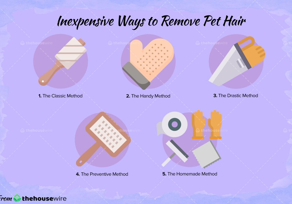 5-inexpensive-ways-to-remove-pet-hair-min