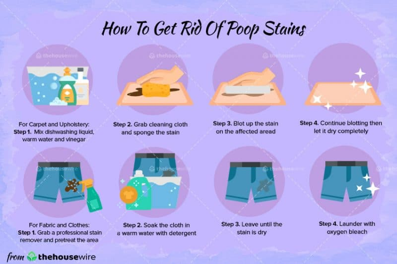 How To Get Rid Of Poop Stains From Carpet, Clothes, And More