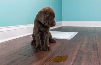 How to Clean Pet Stains on Floors [New Step-By-Step Guide]